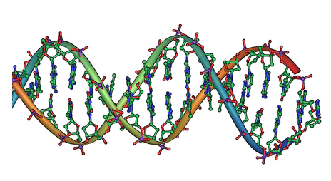 Genetic Disorder   Definition and Information
